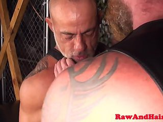 anal,bears,tattoo,gays,bear,anal sex, tattoos,mature sex,gay Silver wolf and bear in bareback action